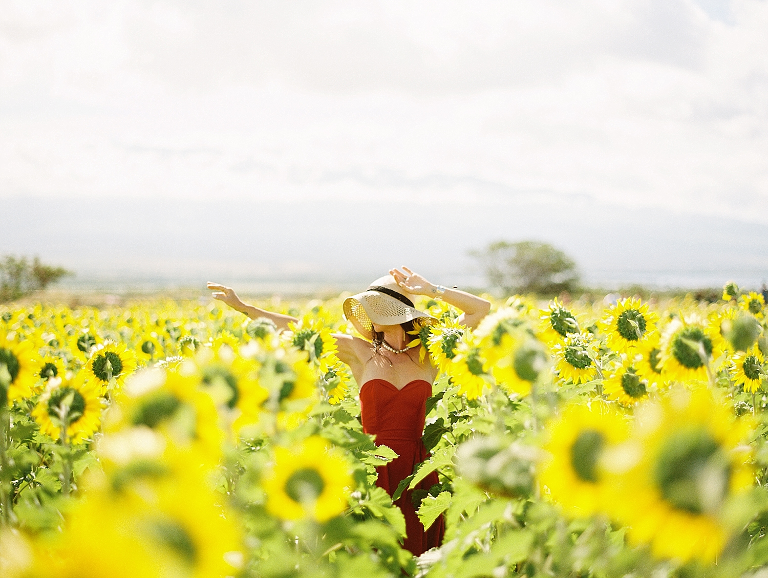 Maui-Sunflowers_0006.jpg