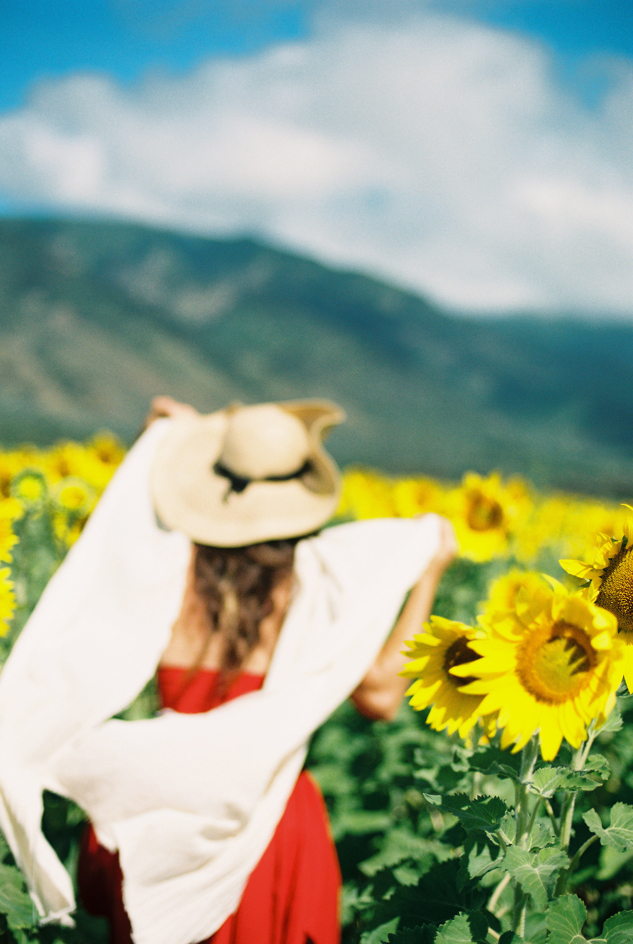 maui-sunflower-field-girl-red-dress-white-scarf-hat-mountains.jpg
