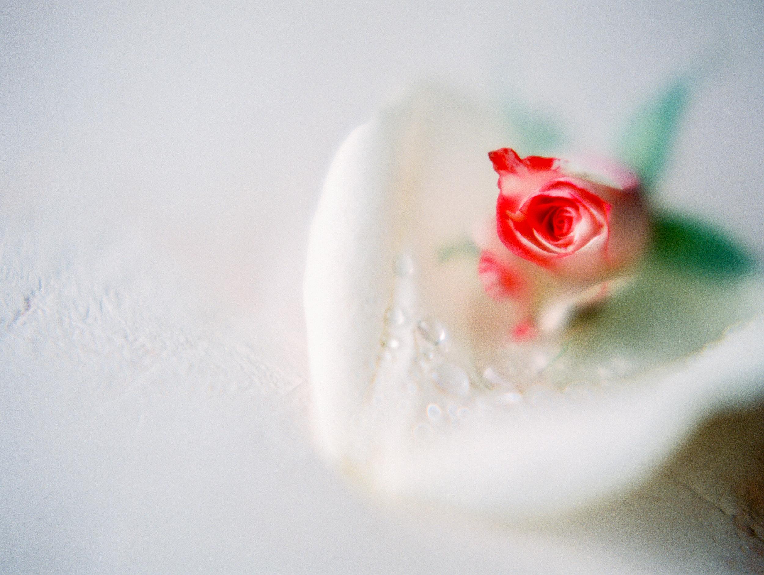 RosewaterStudio059.jpg