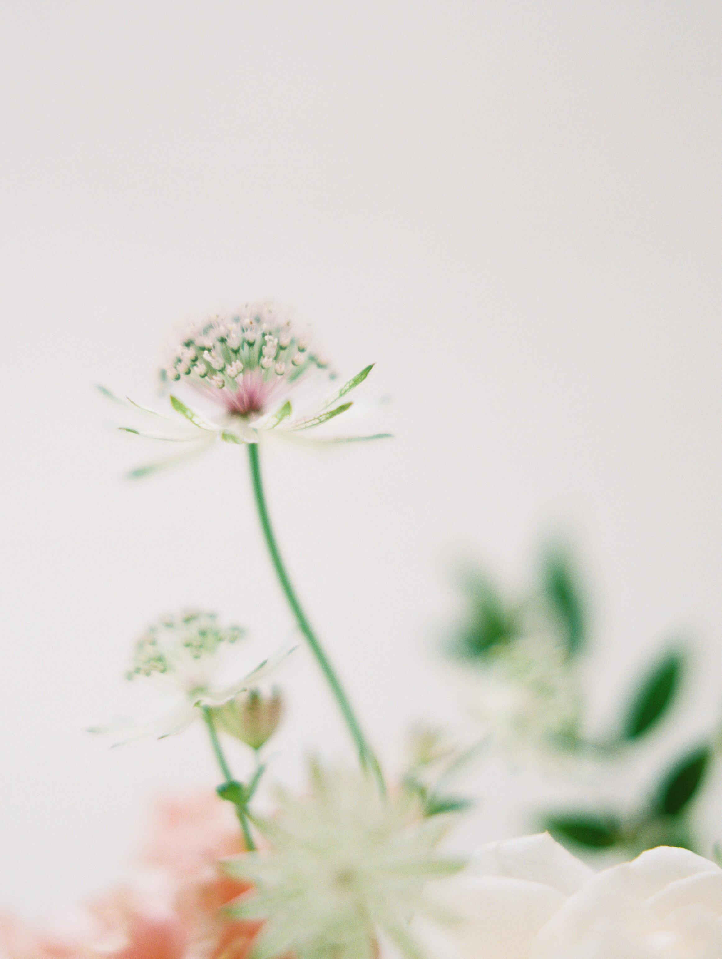 Flora-Centerpieces181.jpg