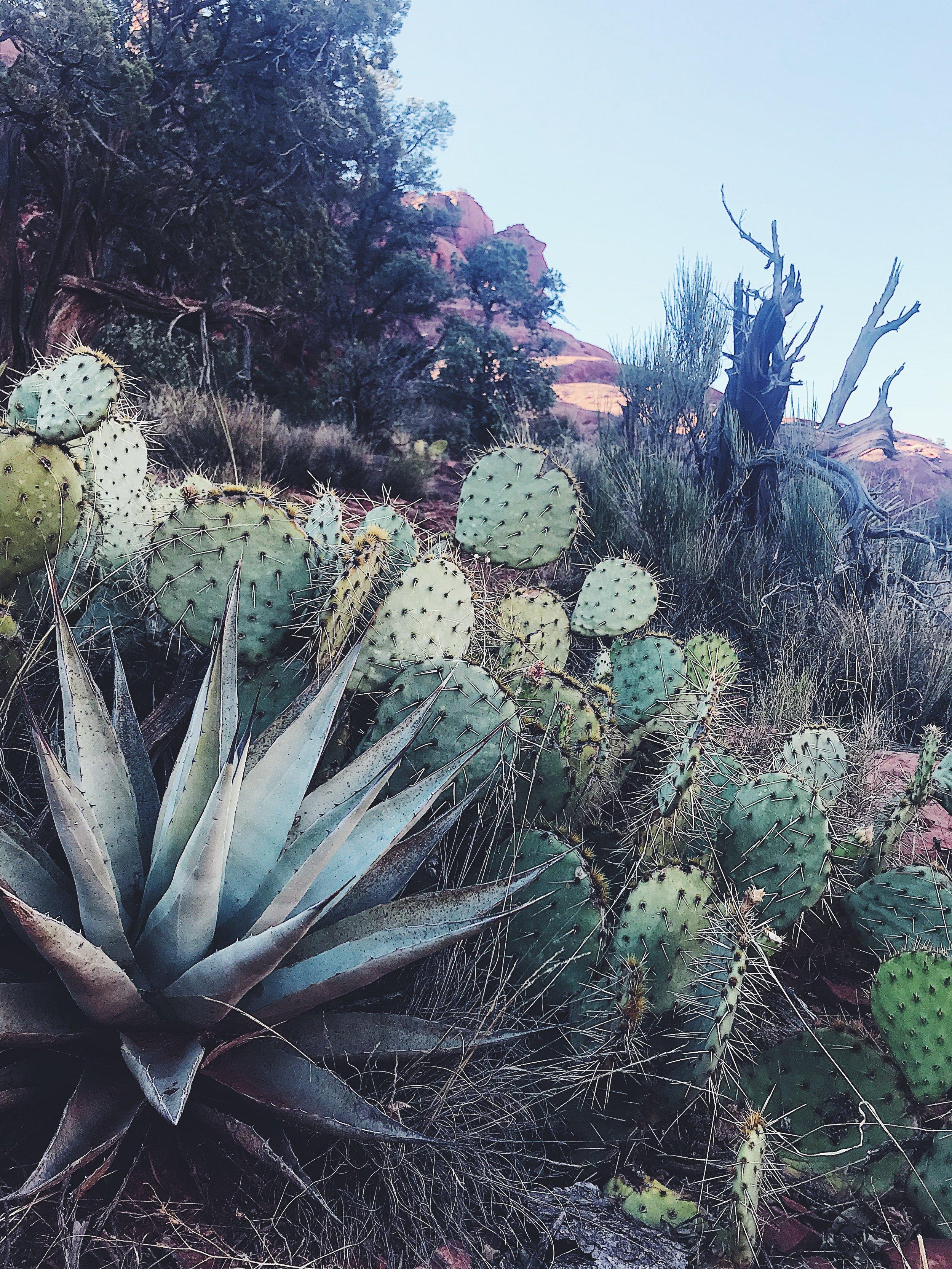 visions of sedona, arizona -