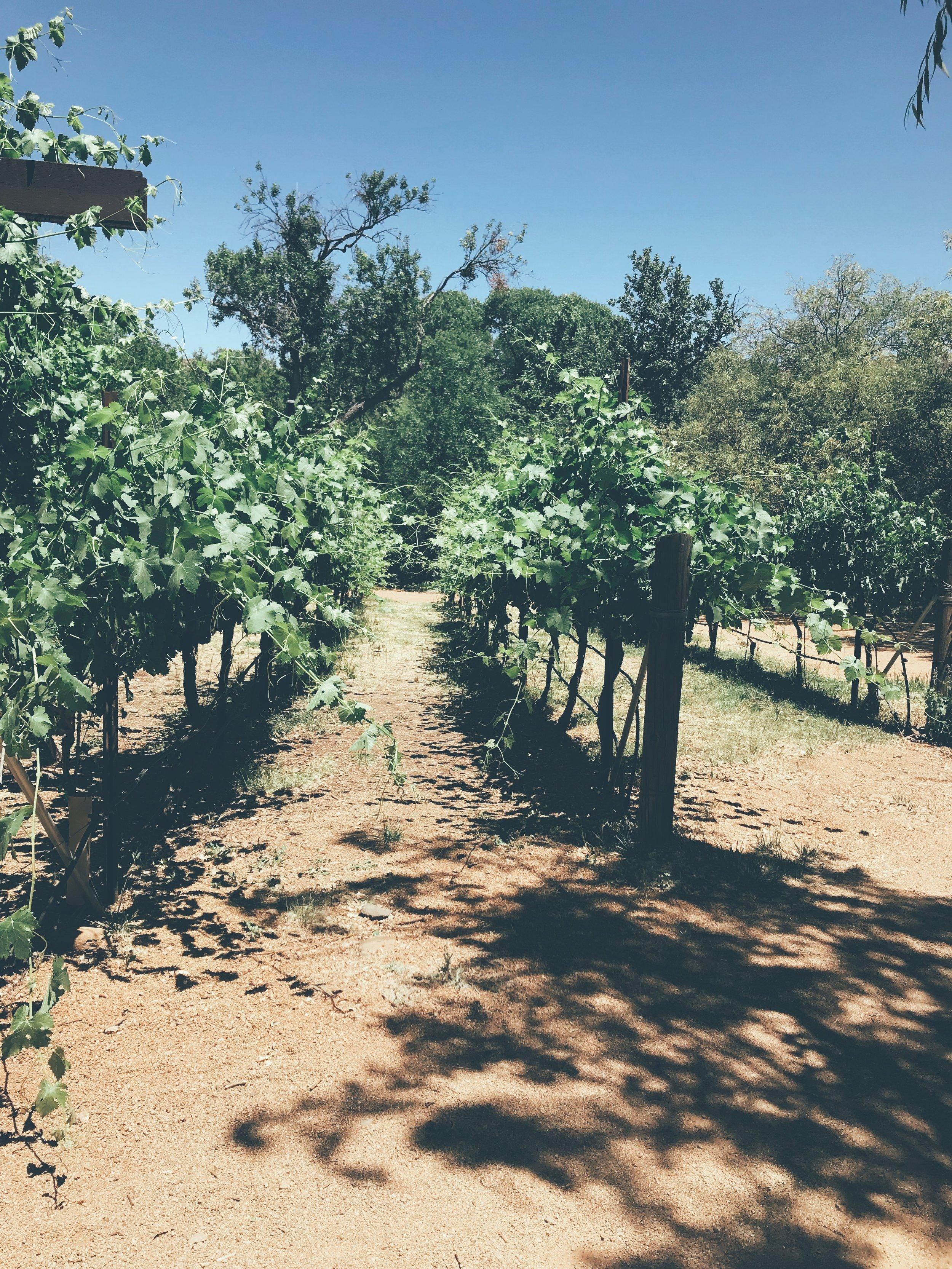 the wine tour -