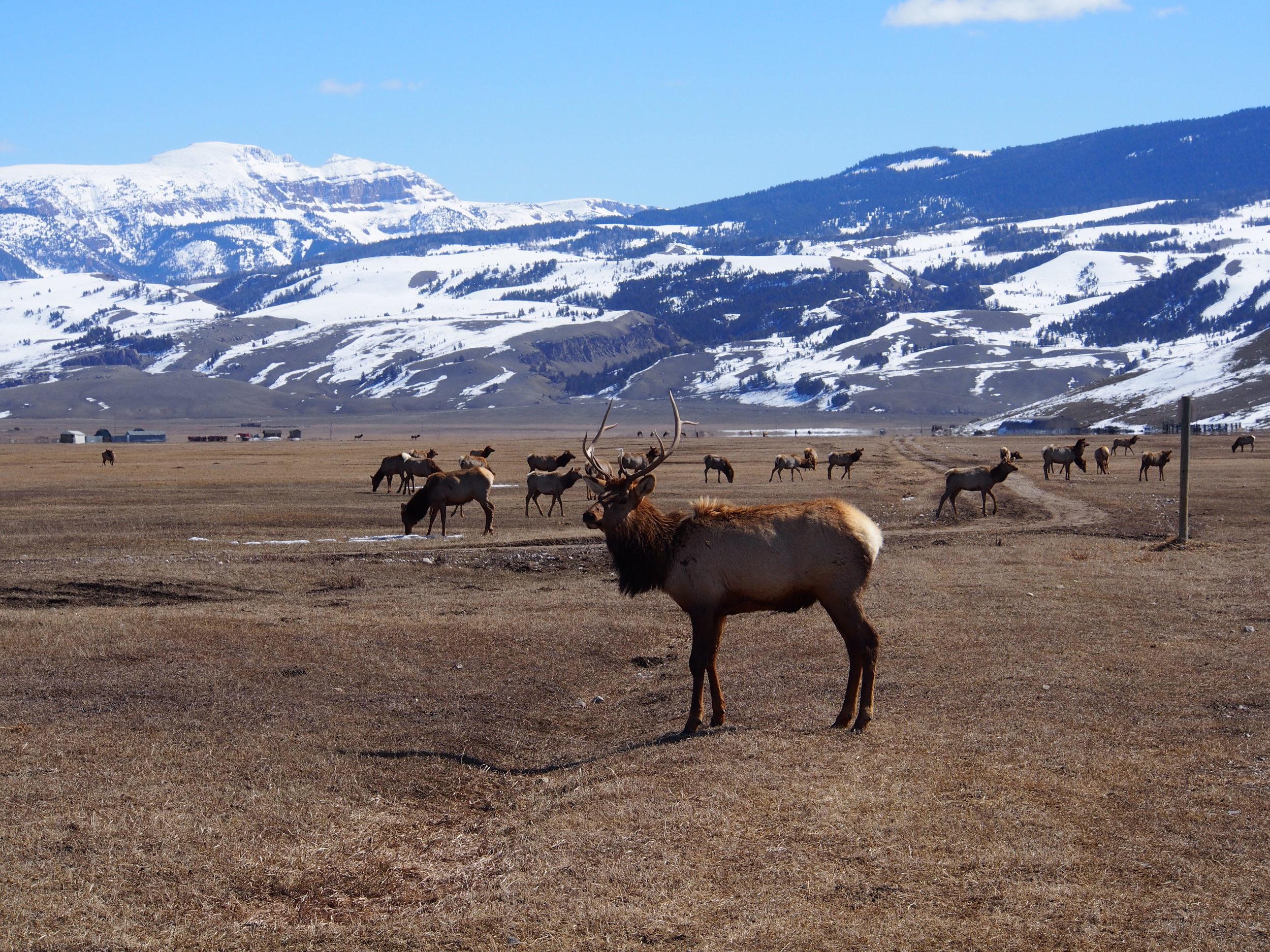 National Elk Refuge, Wyoming.
