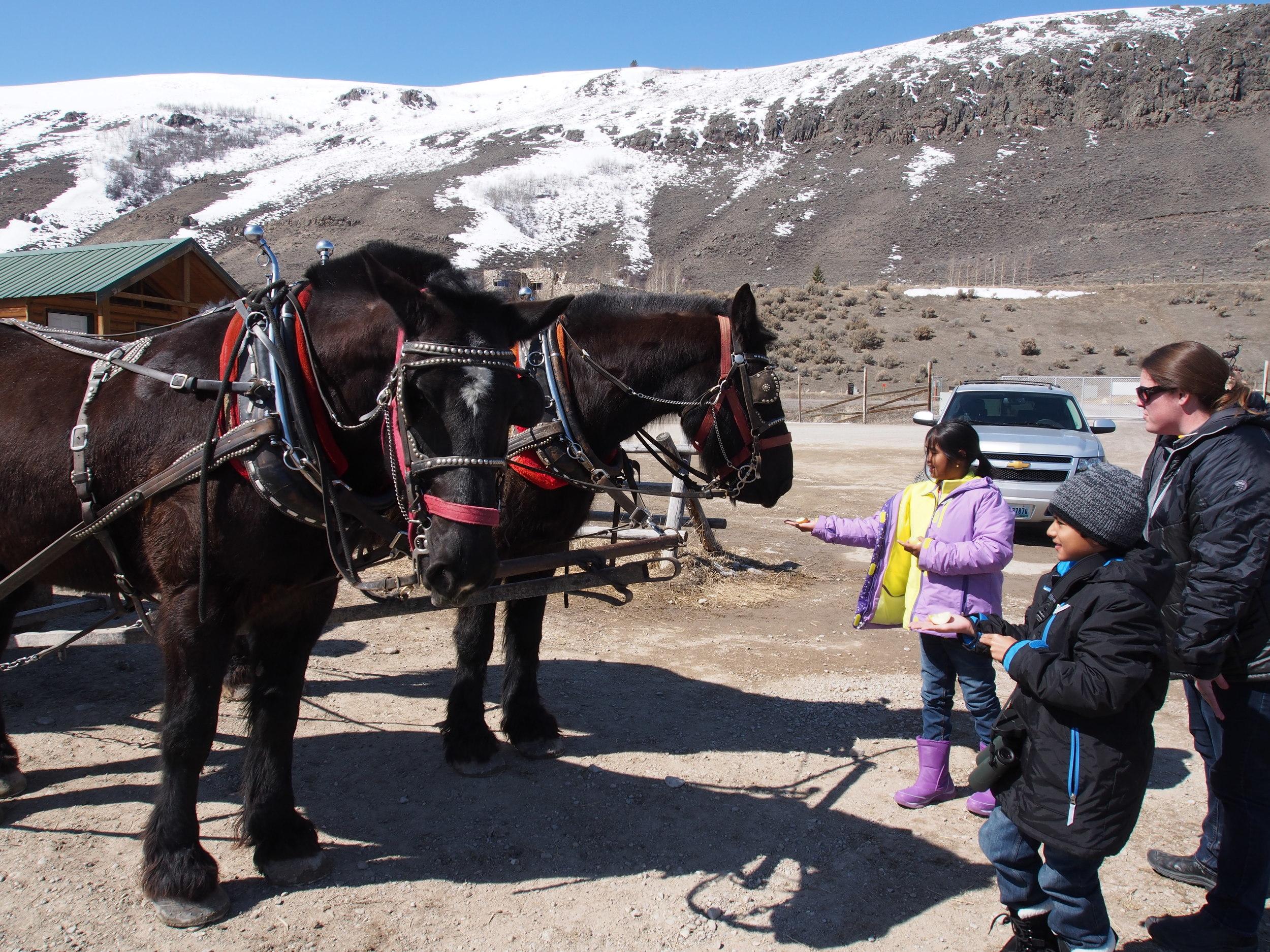 Tenley Thompson - horse and children whisperer