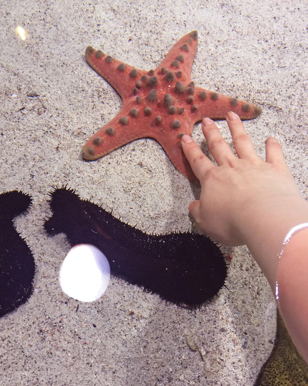 11_Starfish.jpg
