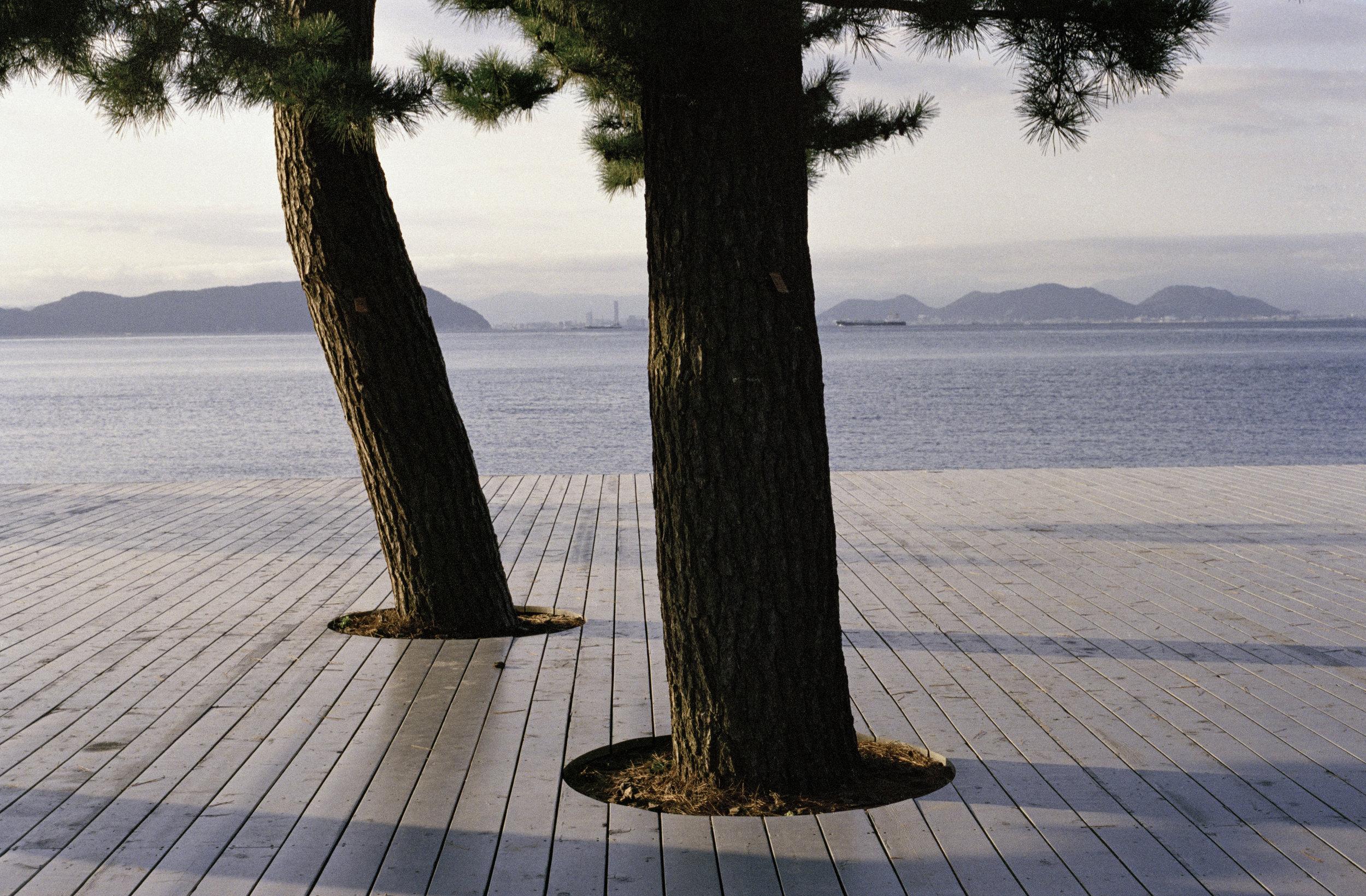 trees_final.jpg