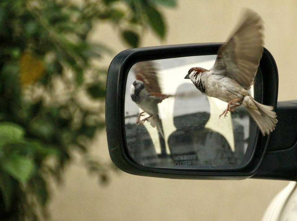 sparrow-320416_960_720.jpg