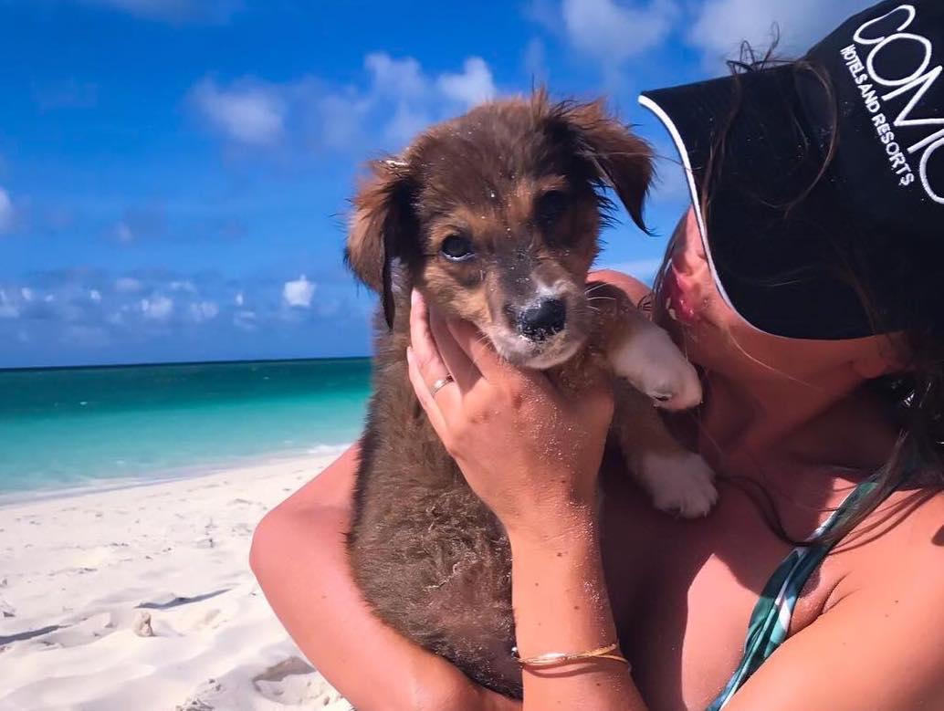 Potcake_place_puppy_rescue_tropical_island.jpg