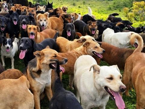 land-of-stray-dogs-territorio-de-zaguates-costa-rica-13-480x360.jpg