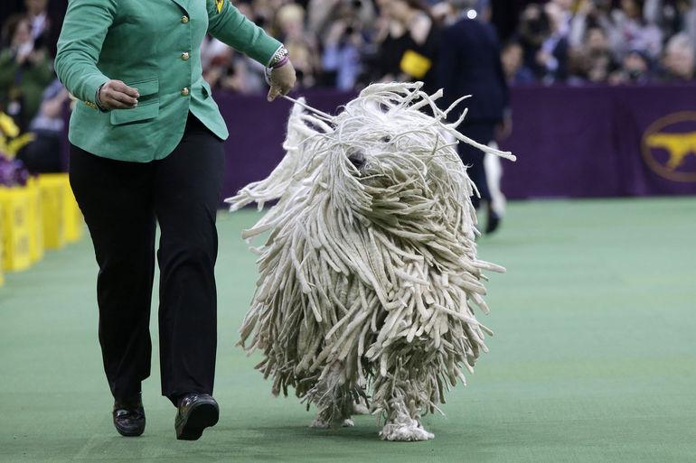 westminster_dog_show.jpeg-0a819.jpg
