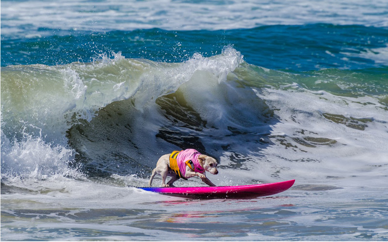 SurfDog_Photo-by-Charmaine-Gray.jpg