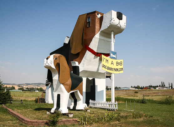 ID+(Dog+Bark+Park+Inn+#1)Candi.jpg