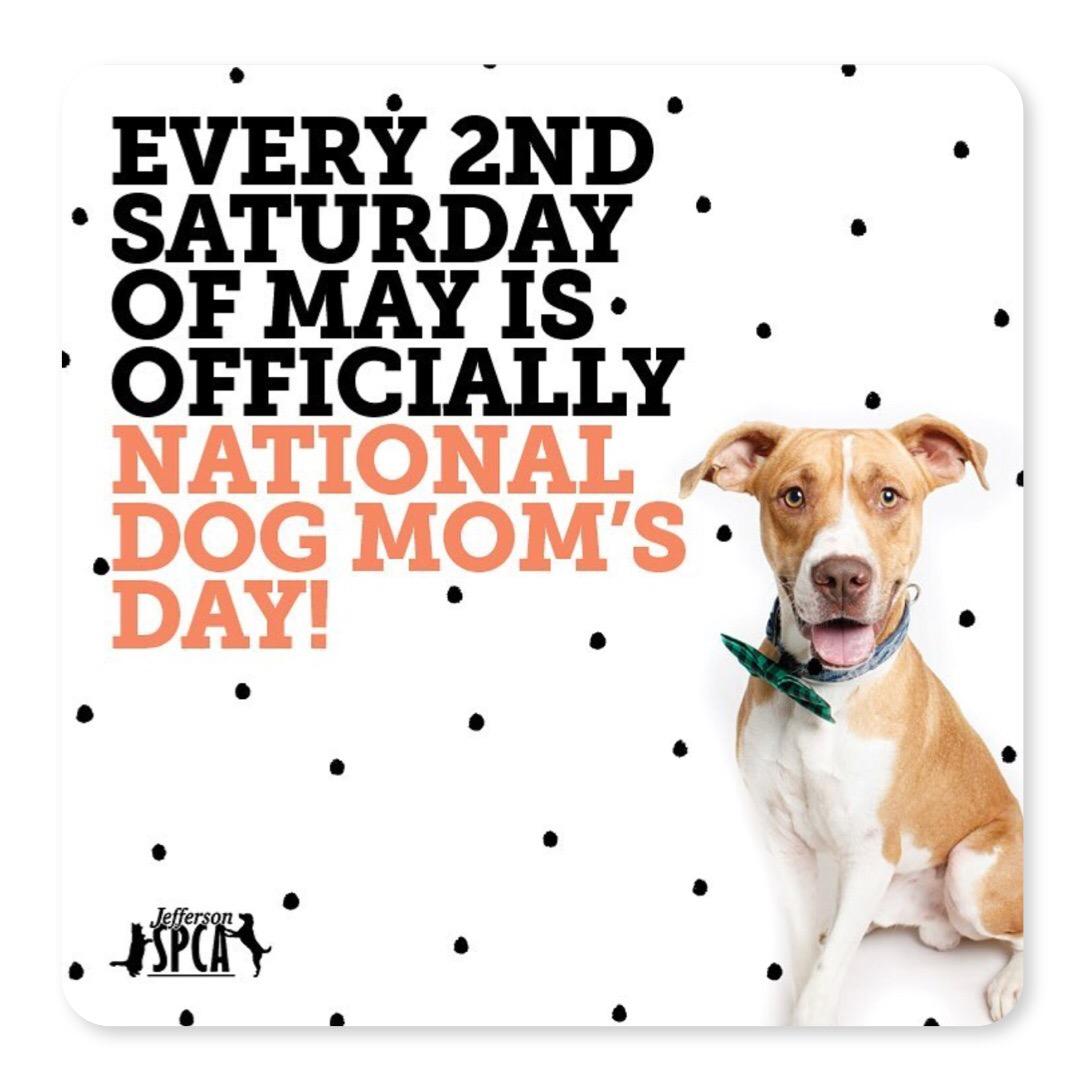 gals best friend national dog moms day