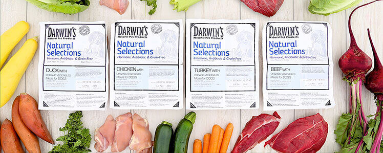 darwins natural selections.jpg