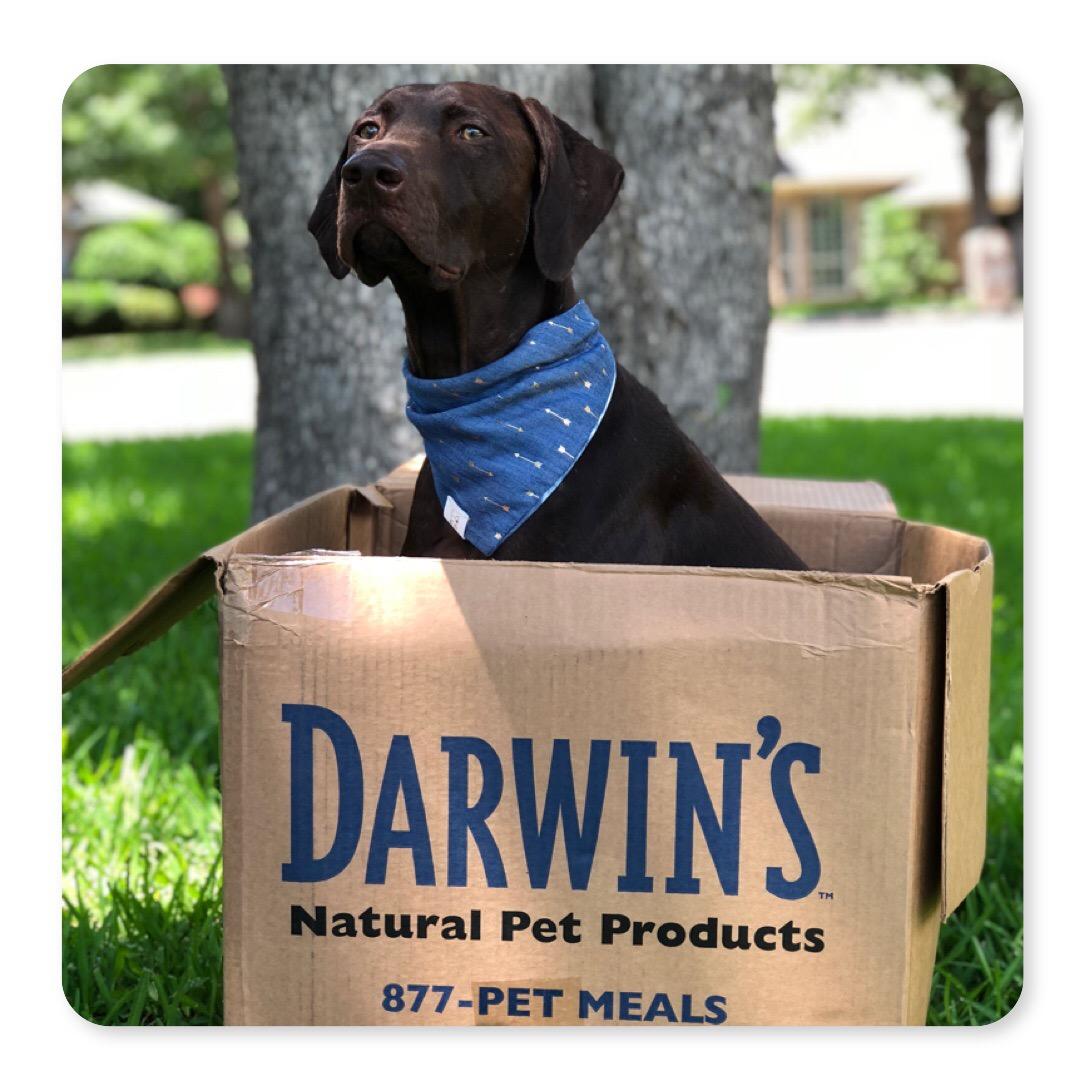 darwin's raw dog food box