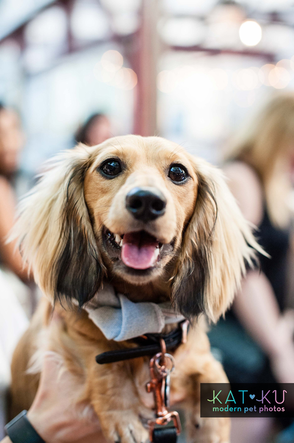 Kat Ku Modern Pet Photos - Gals Best Friend Event NYC_02.jpg