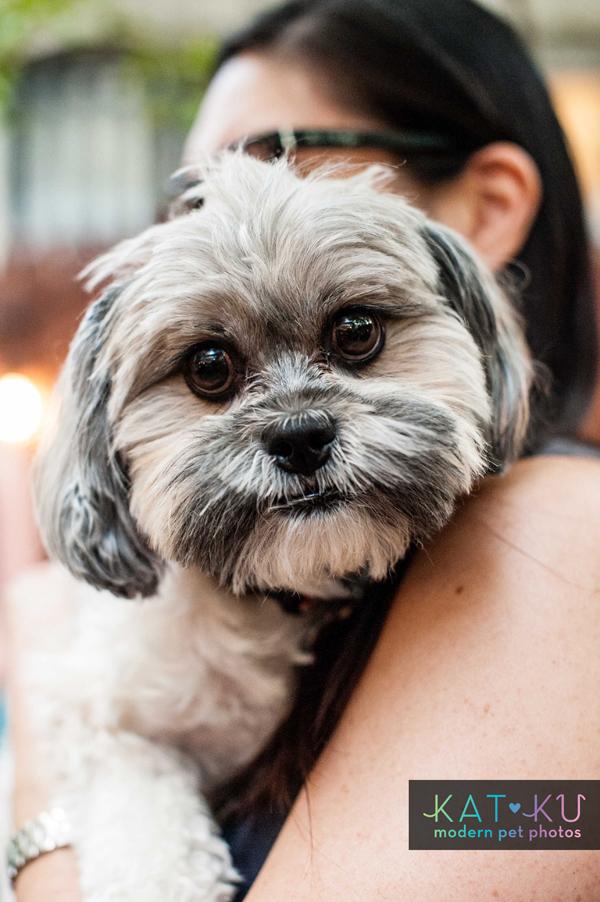 Kat Ku Modern Pet Photos - Gals Best Friend Event NYC_10.jpg