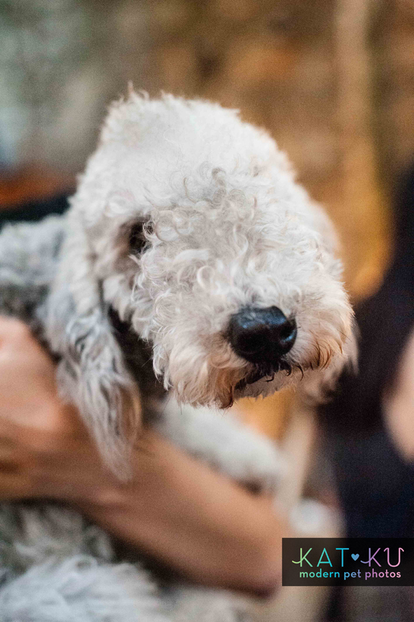 Kat Ku Modern Pet Photos - Gals Best Friend Event NYC_12.jpg