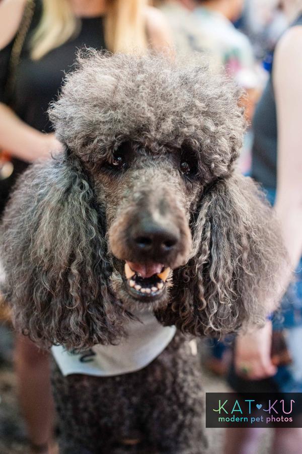 Kat Ku Modern Pet Photos - Gals Best Friend Event NYC_13.jpg