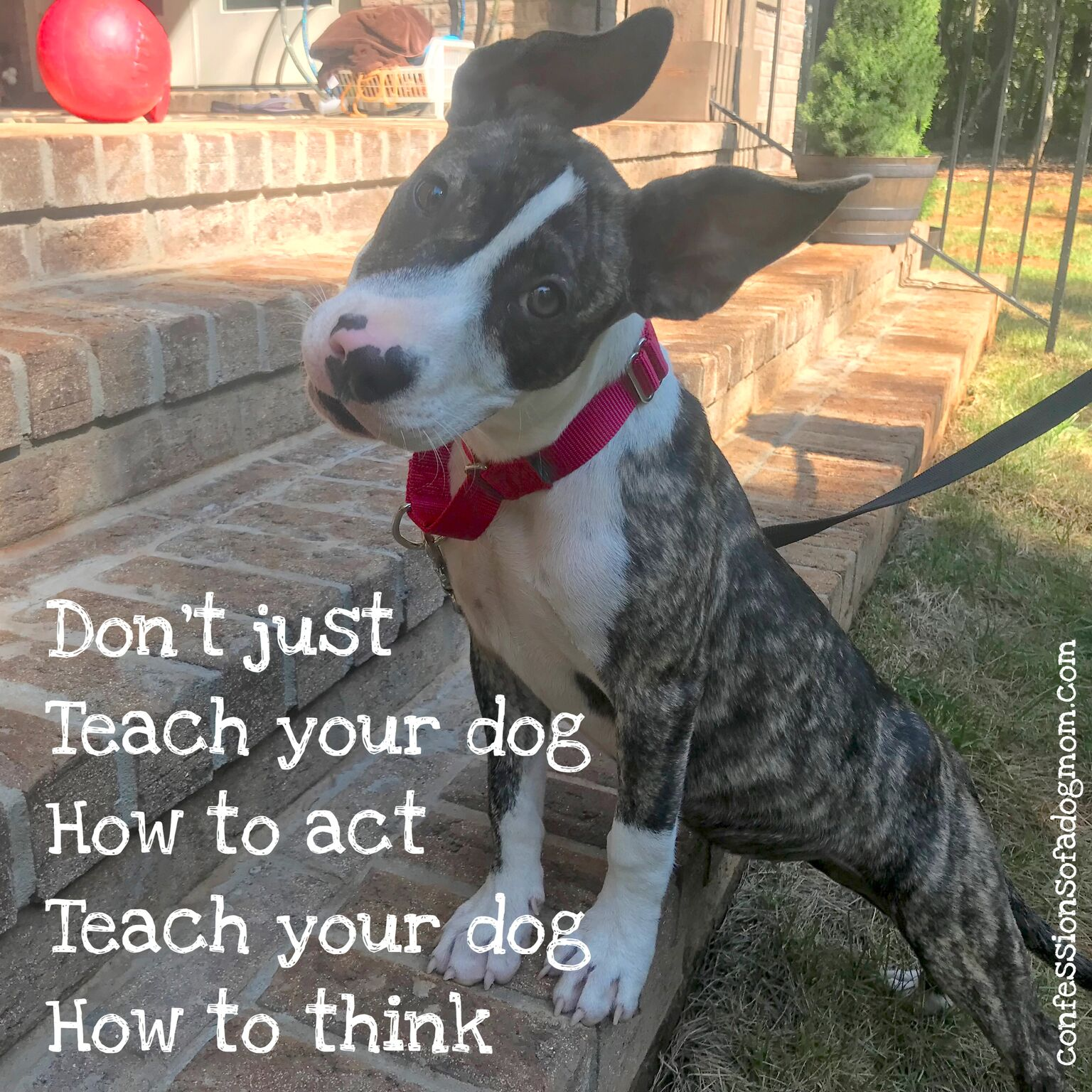 """""""Don't just teach your dog how to act, teach your dog how to think."""""""