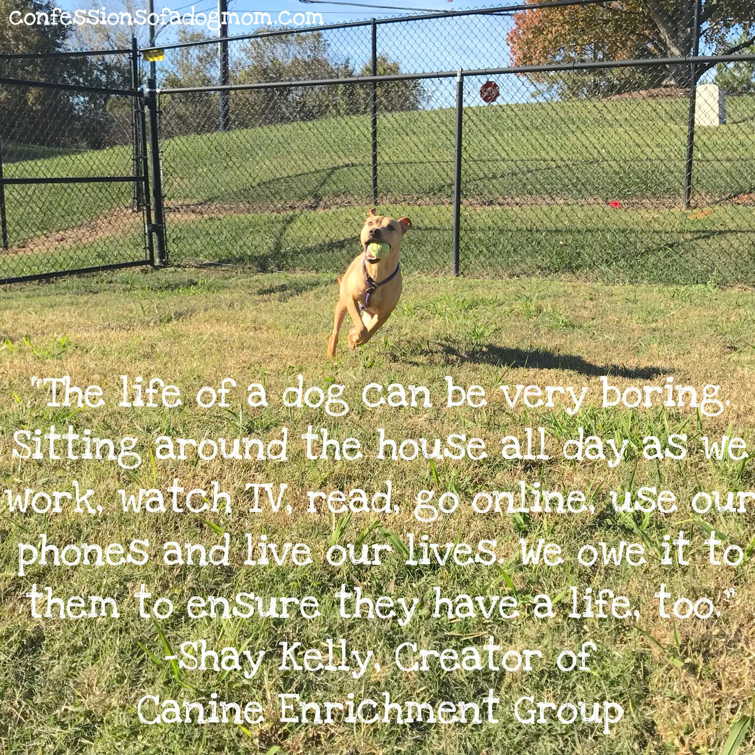 """""""The life of a dog can be very boring. Sitting around the house all day as we work, watch TV, read, go online, use our phones, and live our lives. We owe it to them to ensure they have a life too."""""""