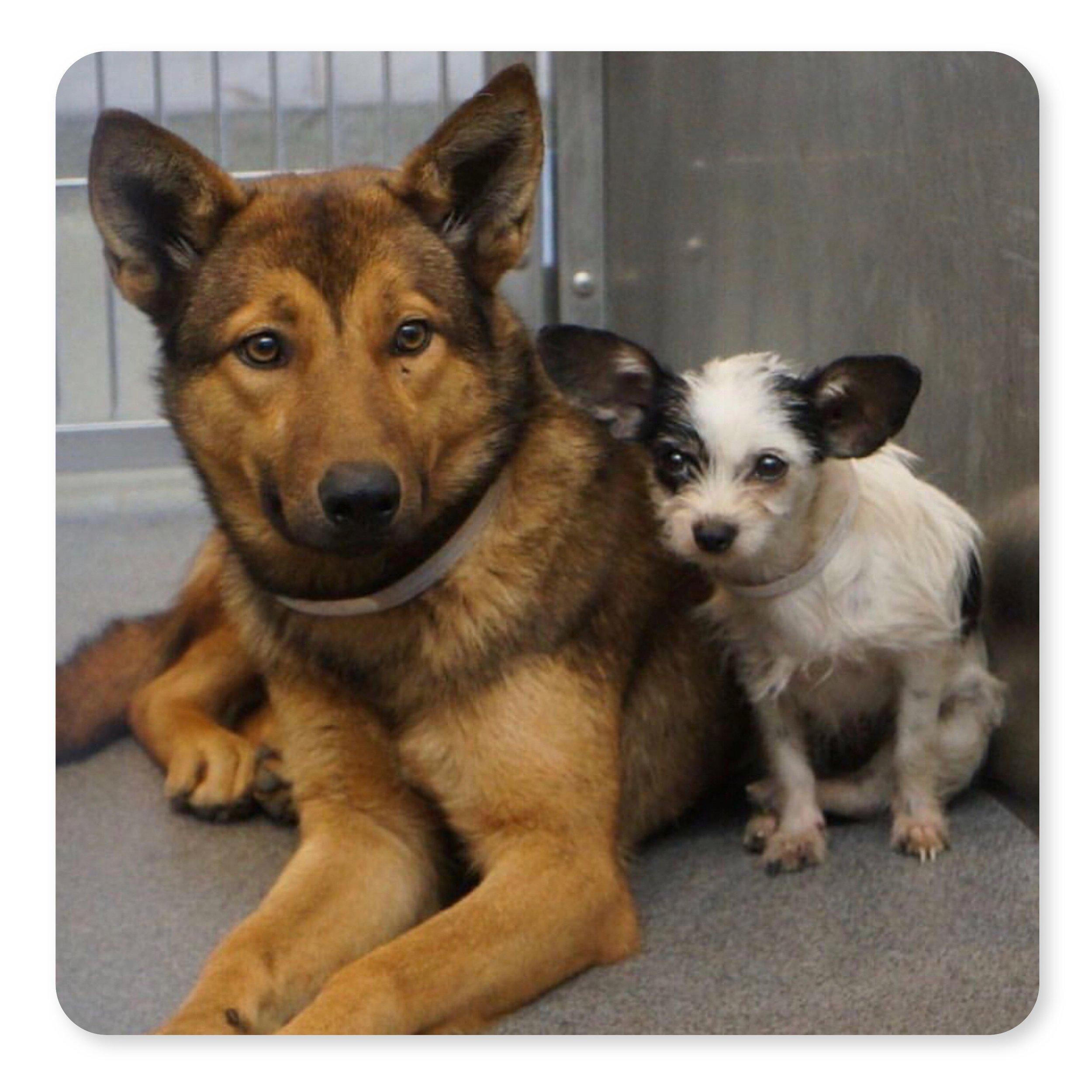 thestreetdogproject-galsbestfriend