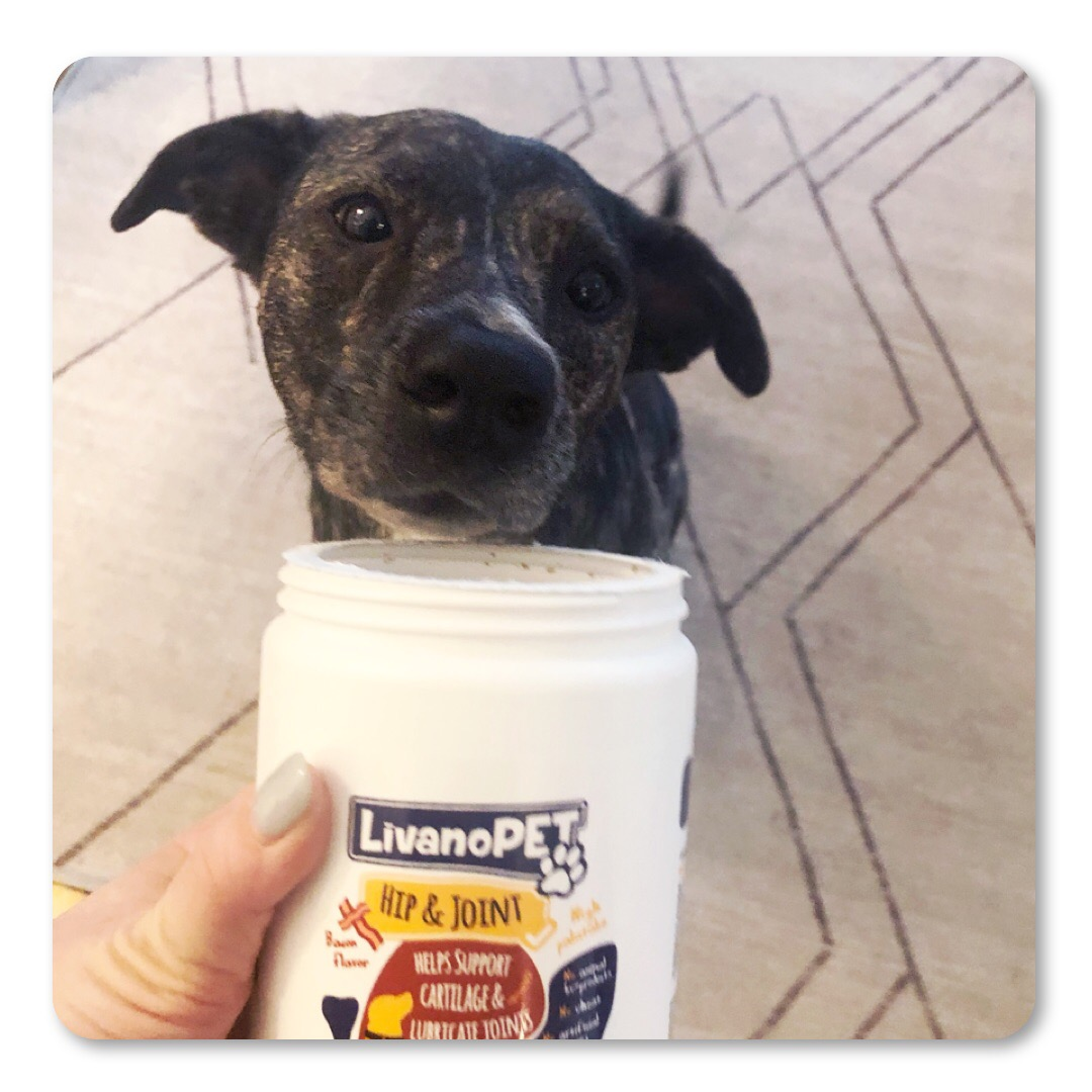 Rumba is smelling the delicious supplements.