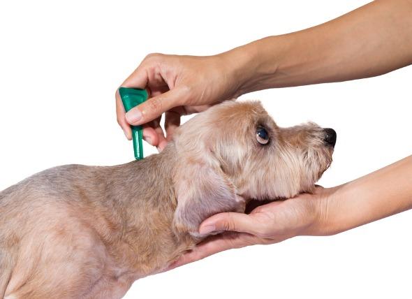 flea-tick-medicine-poisoning-dogs.jpg