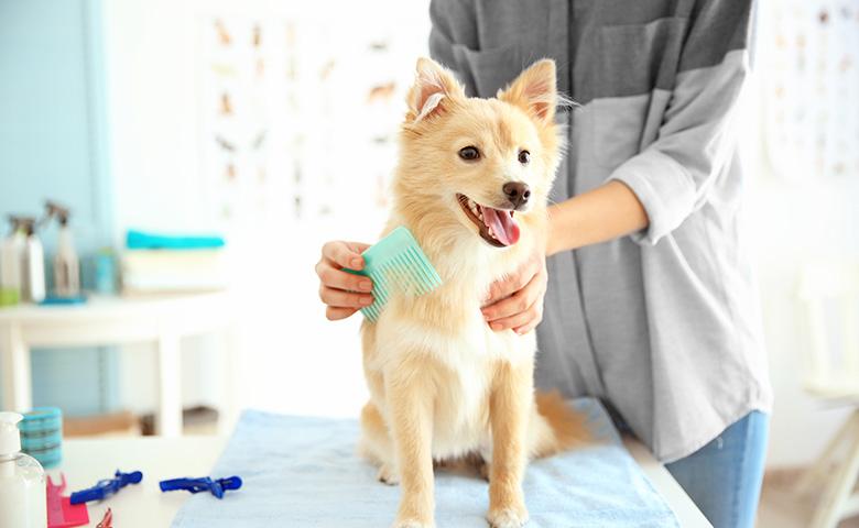 dog-groomed.jpg