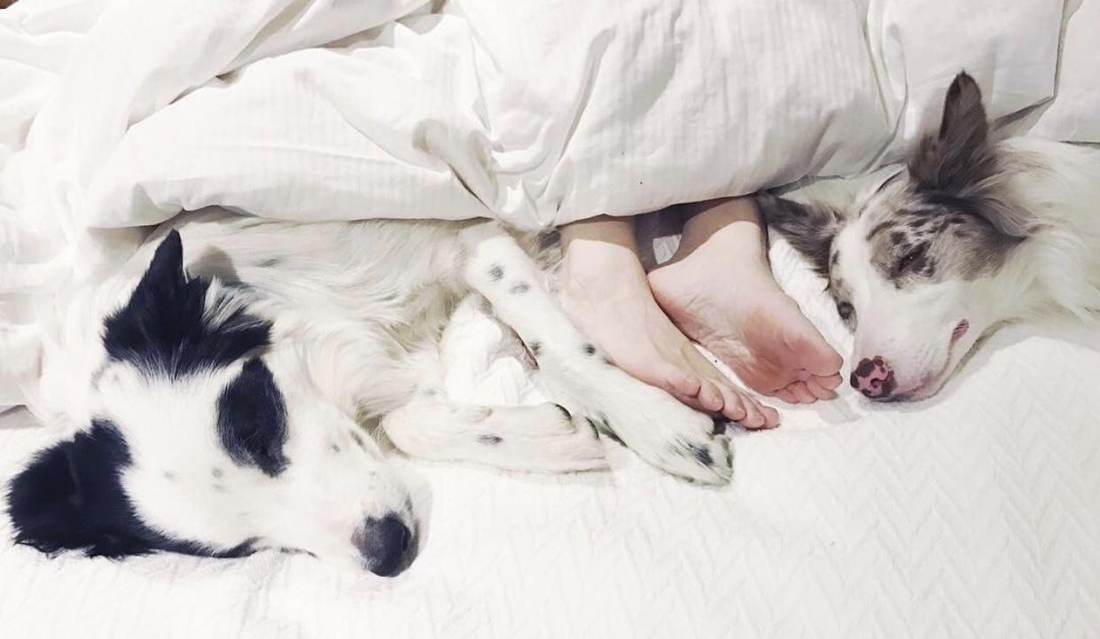 sleeping habits of my dog- galsbestfriend