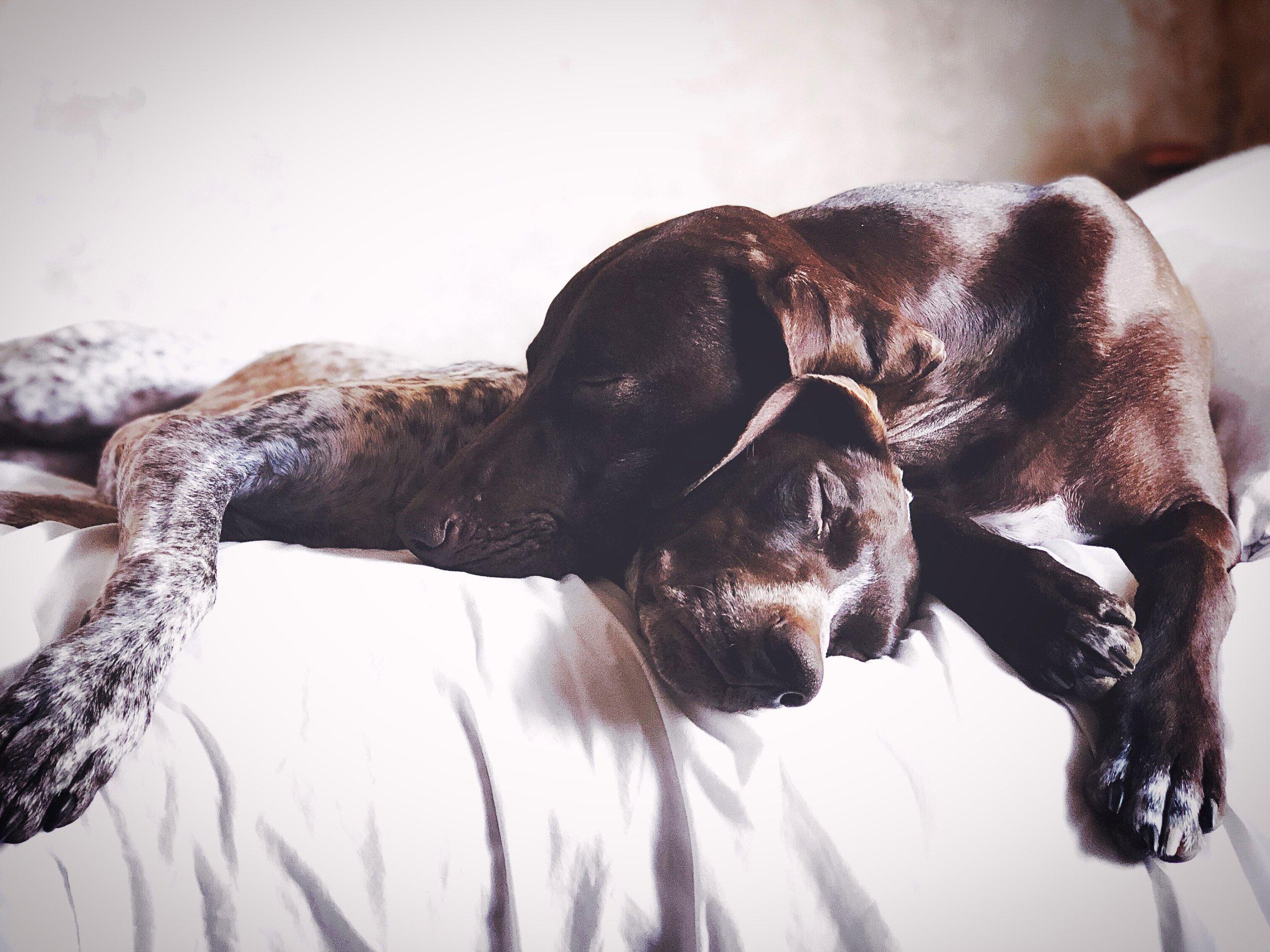 sleeping habit of my dog- galsbestfriend