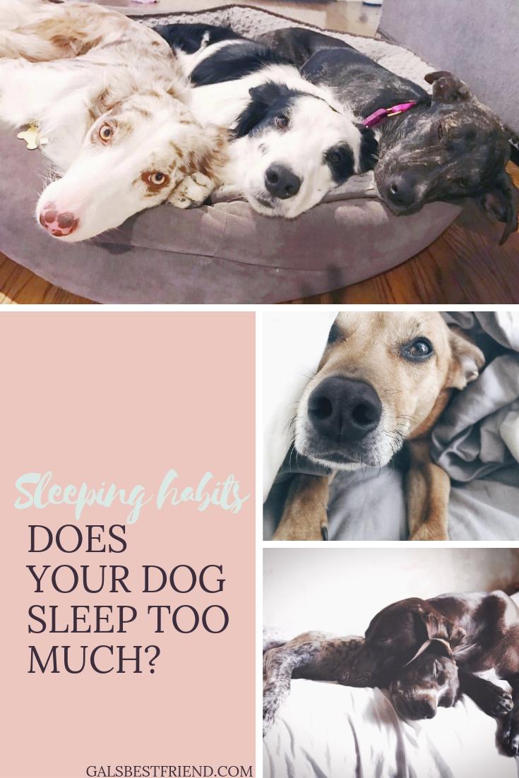 sleeping habits of my dog- gals best friend