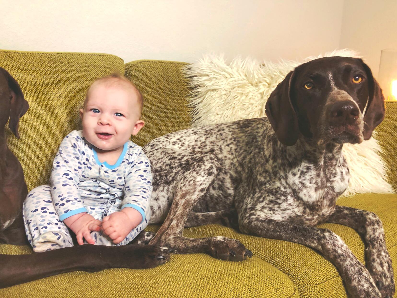 dog friendly sofa 1