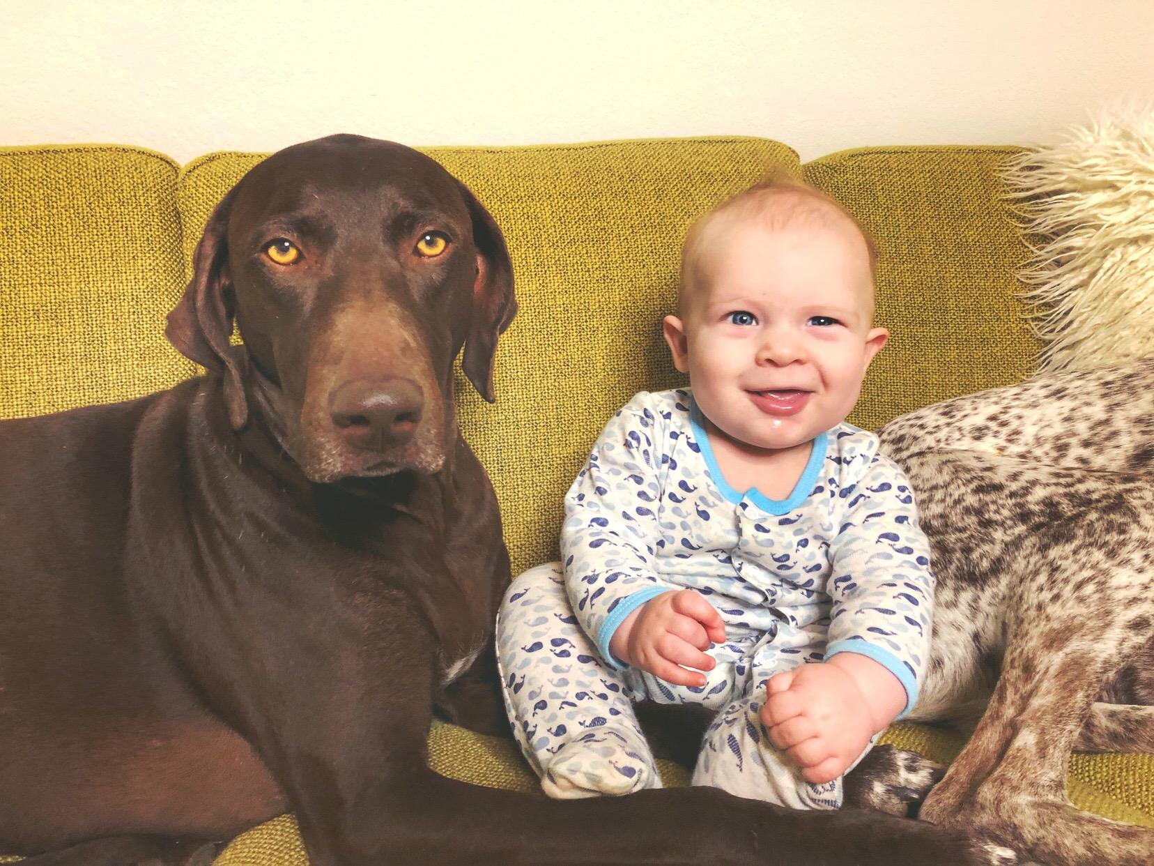 dog friendly sofa 2