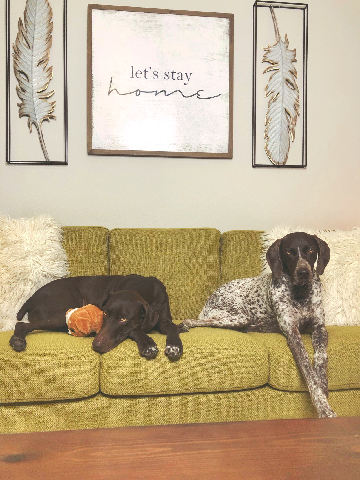 dog friendly sofa 3