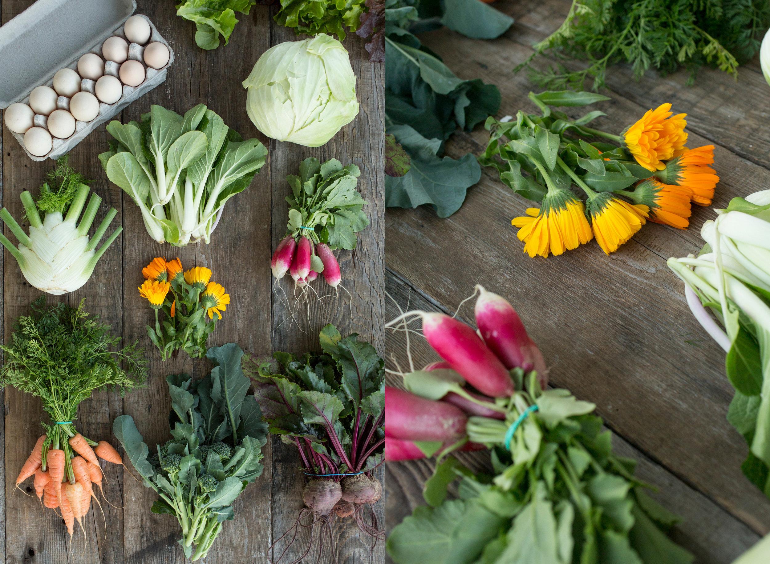 Fresh produce from Piccolo Farm