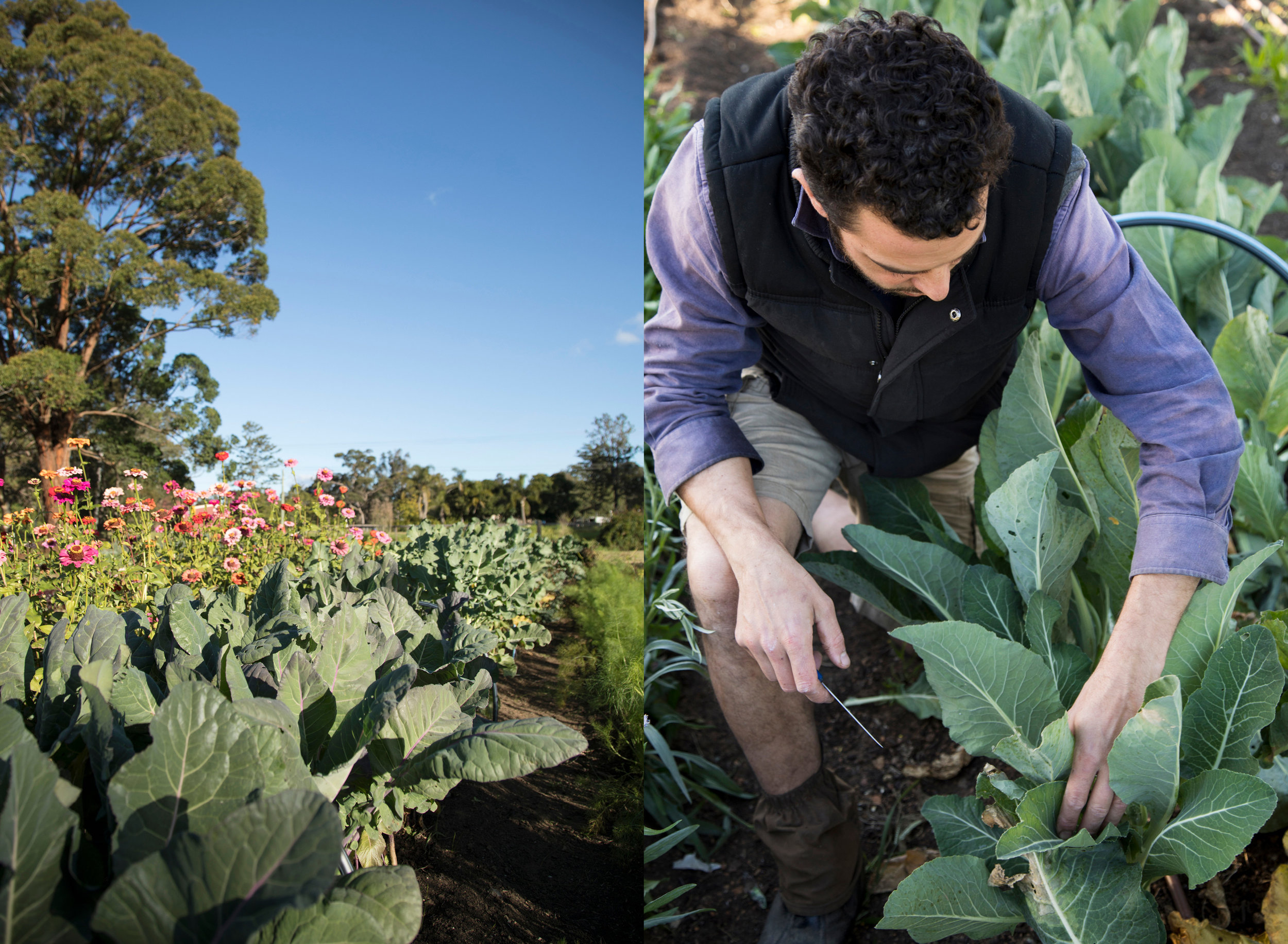 Giangi at work at Piccolo Farm in Thirlmere, NSW
