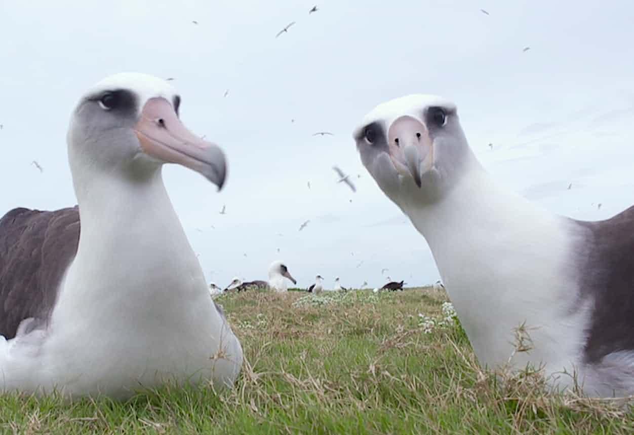 Jordan focuses on the bonds that last a lifetime ... a scene from Albatross. Photograph: Chris Jordan