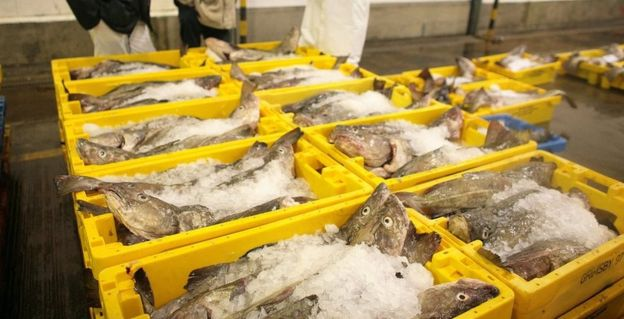 The report projects an increase in the industrial capture of fish