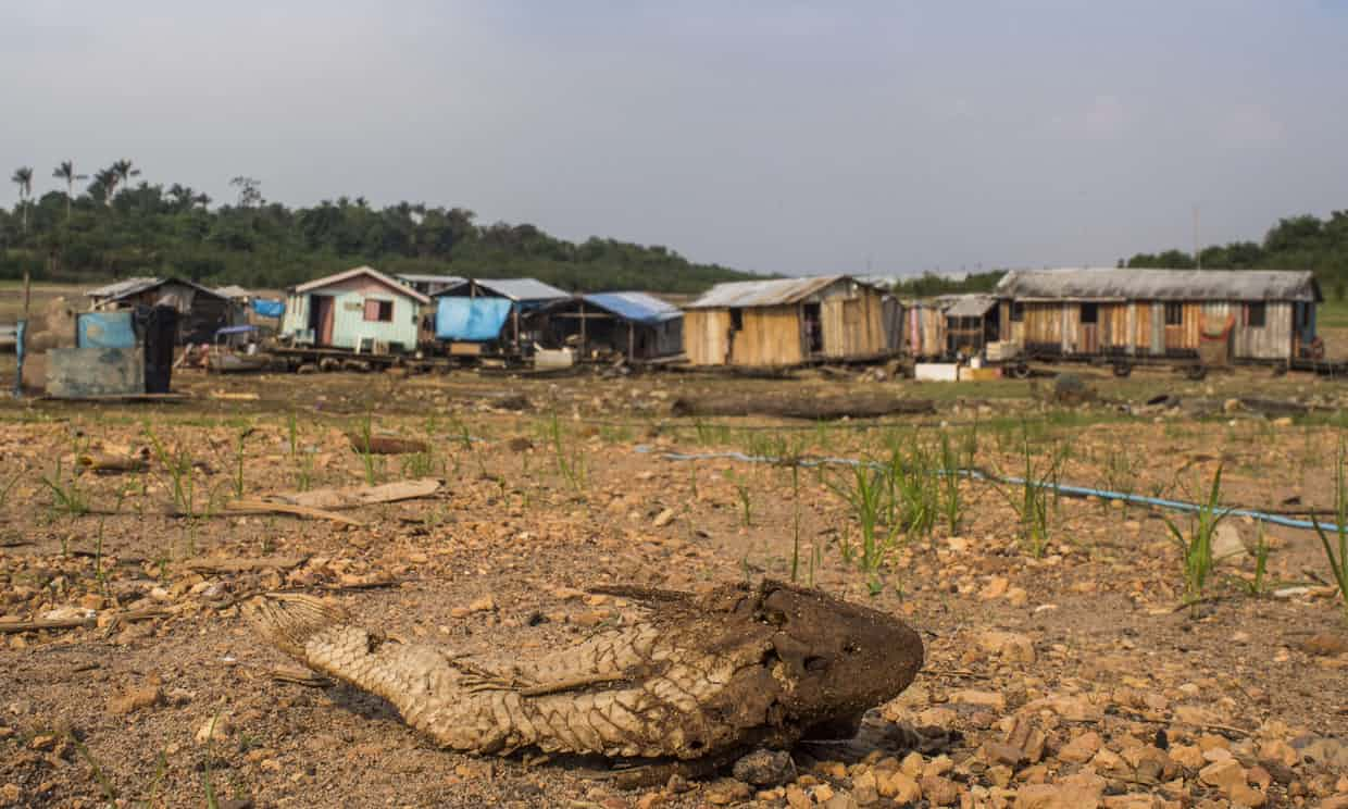 A dead Bodó fish in front of stranded floating houses on the bed of Negro River, a major tributary of the Amazon River, during a drought in 2015. Photograph: Raphael Alves/AFP/Getty Images