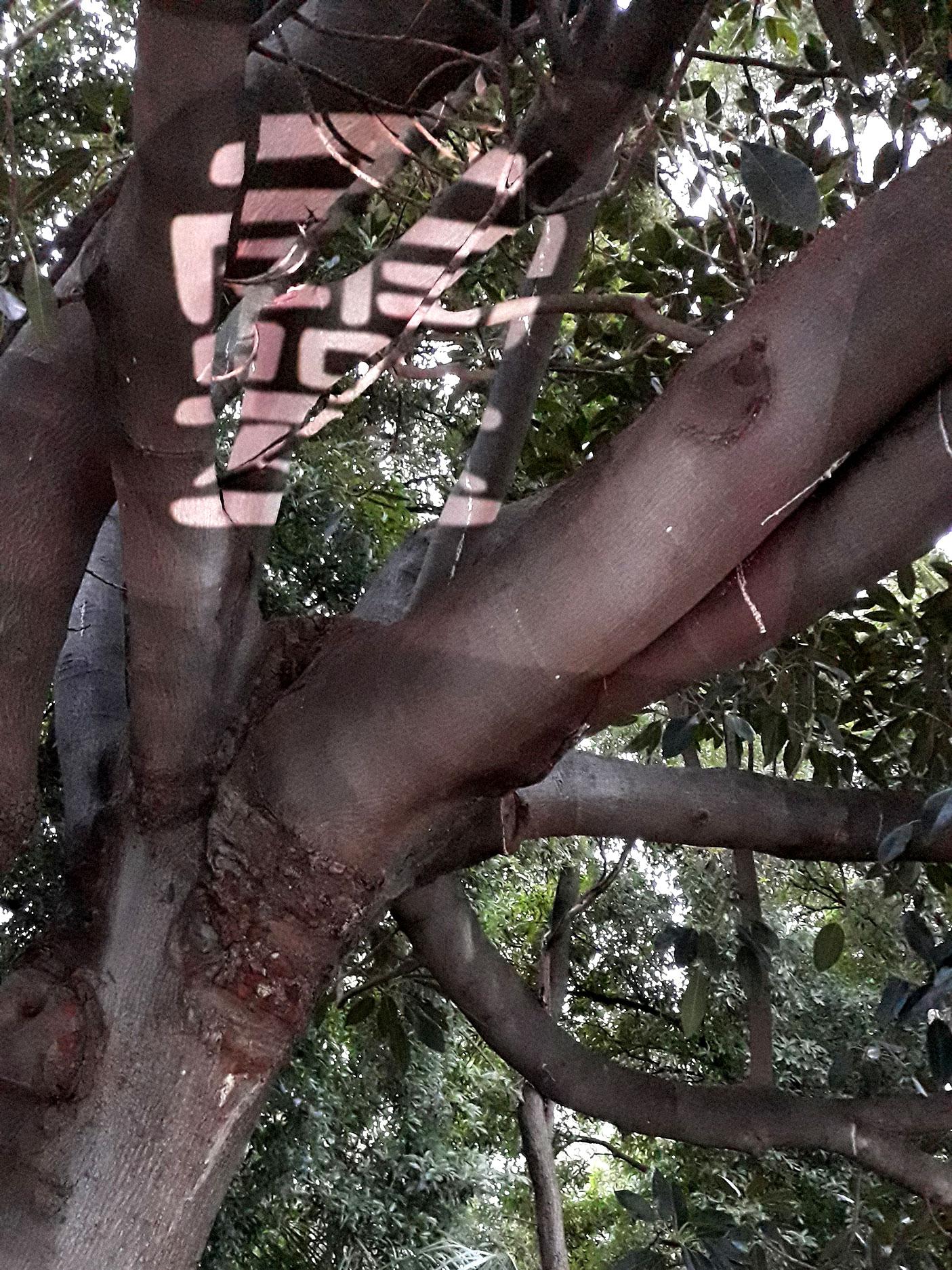 ling-in-tree.jpg