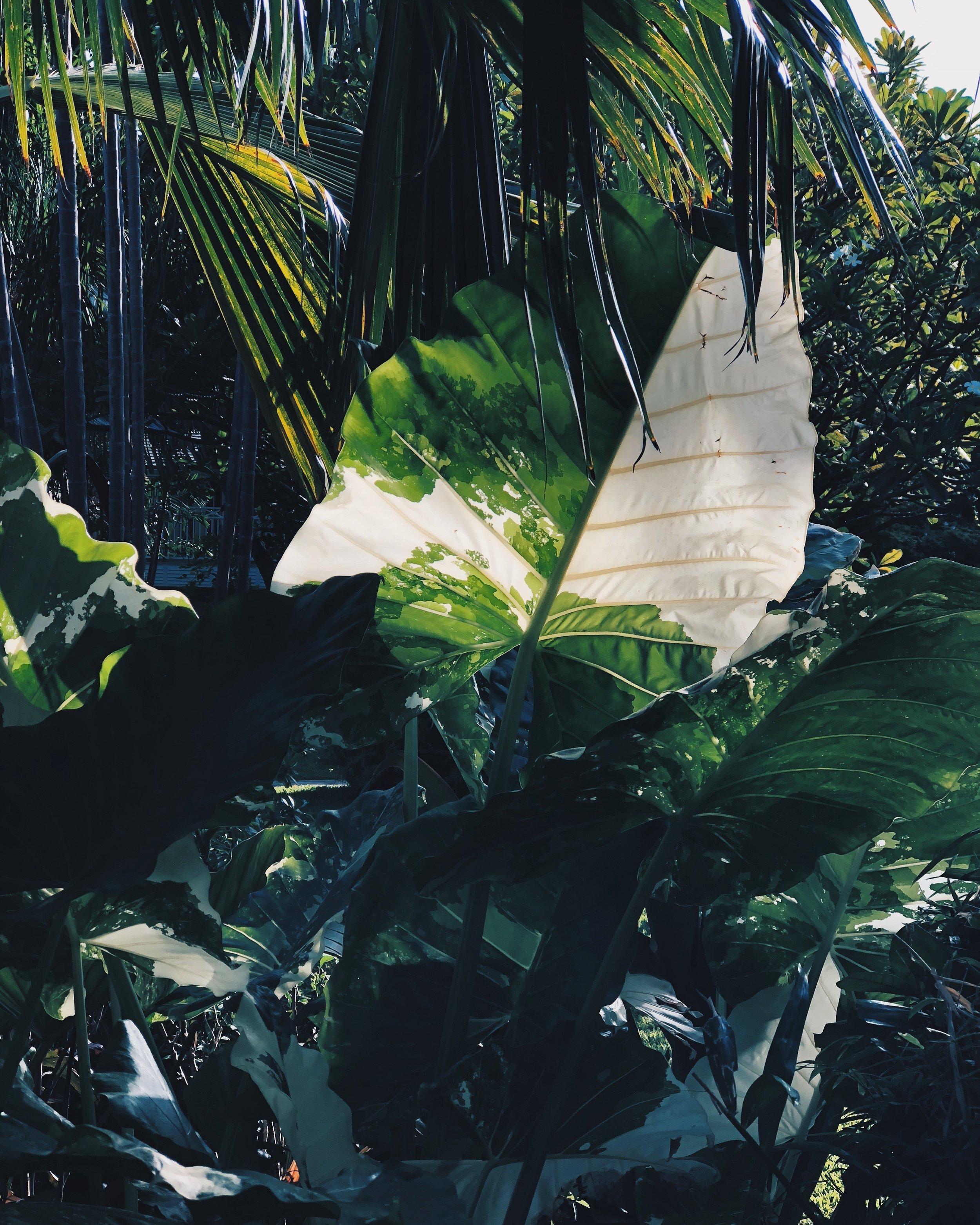 Barbados-via-cobblers-cove-kiel-bonhomme-3