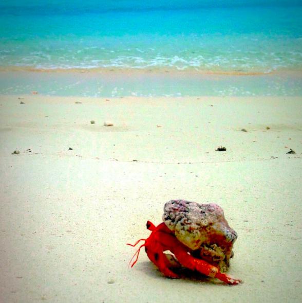 New Maldives - Jake (5).jpg