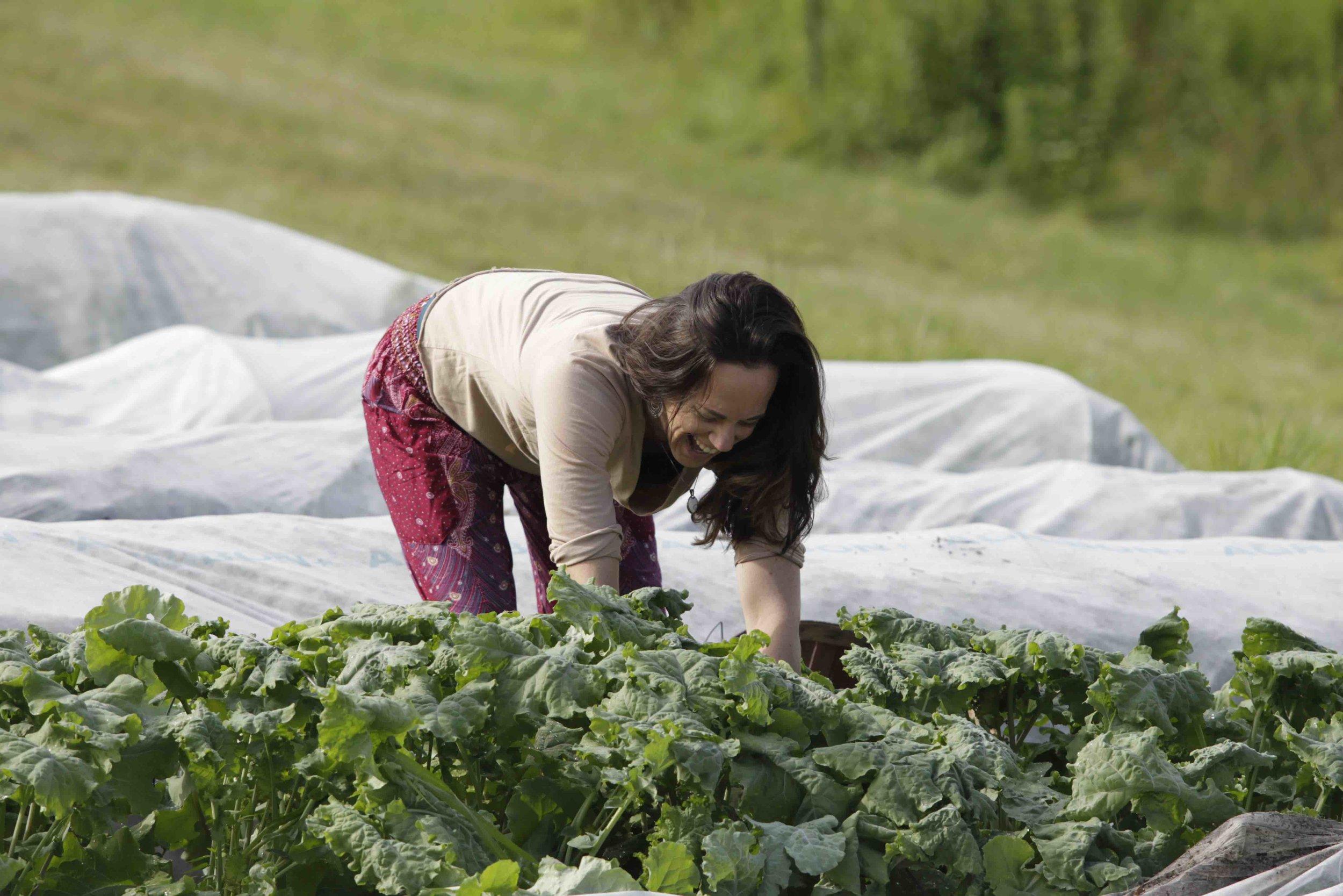Harvesting Dinner 2 copy.jpg