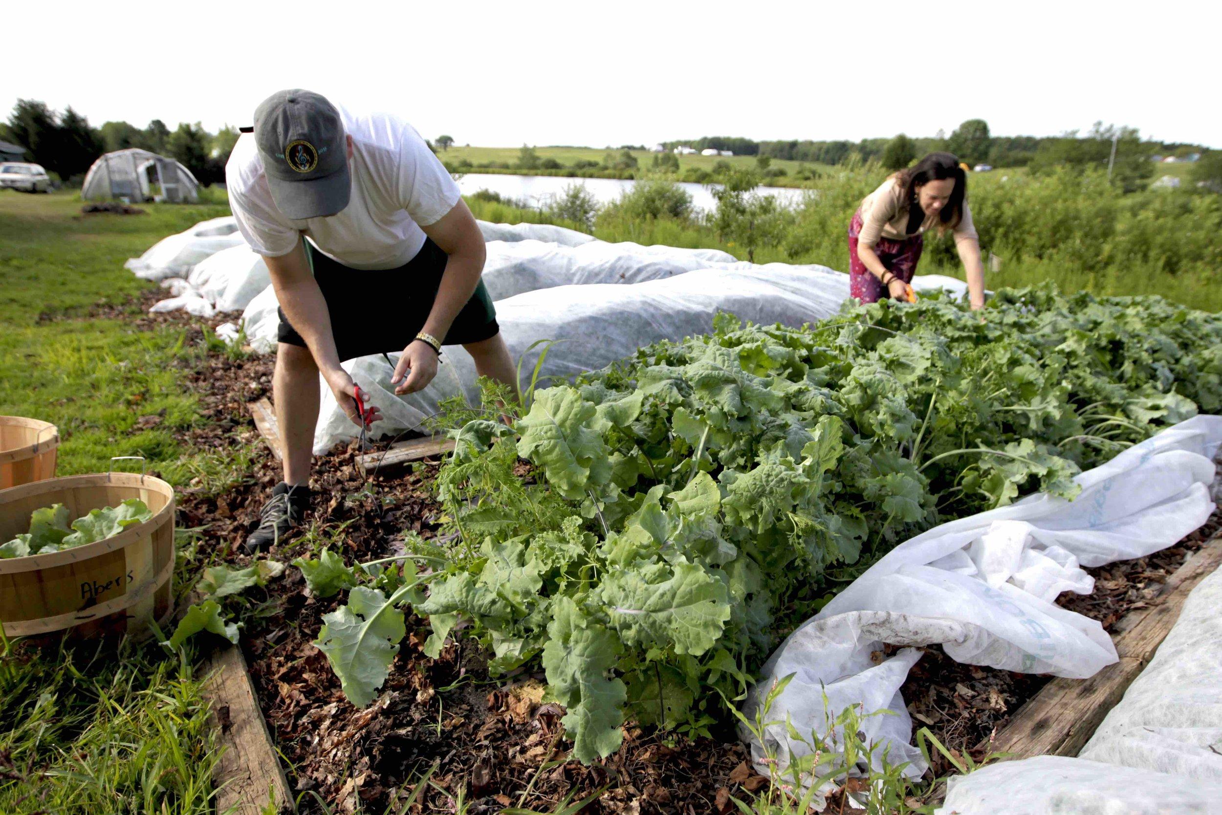 Harvesting Dinner 3 copy.jpg