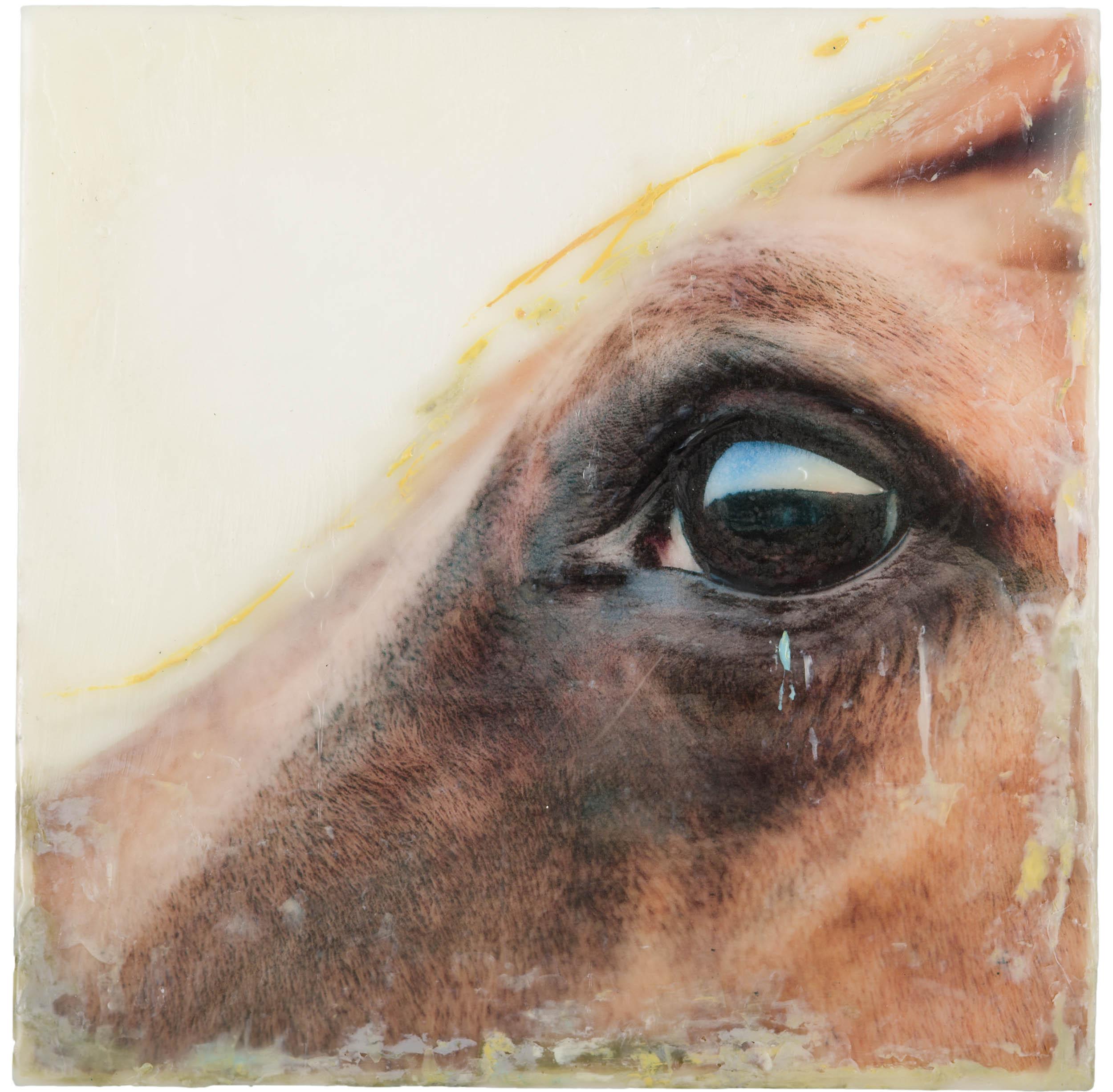 Norah Levine  (TX)  Horse #1