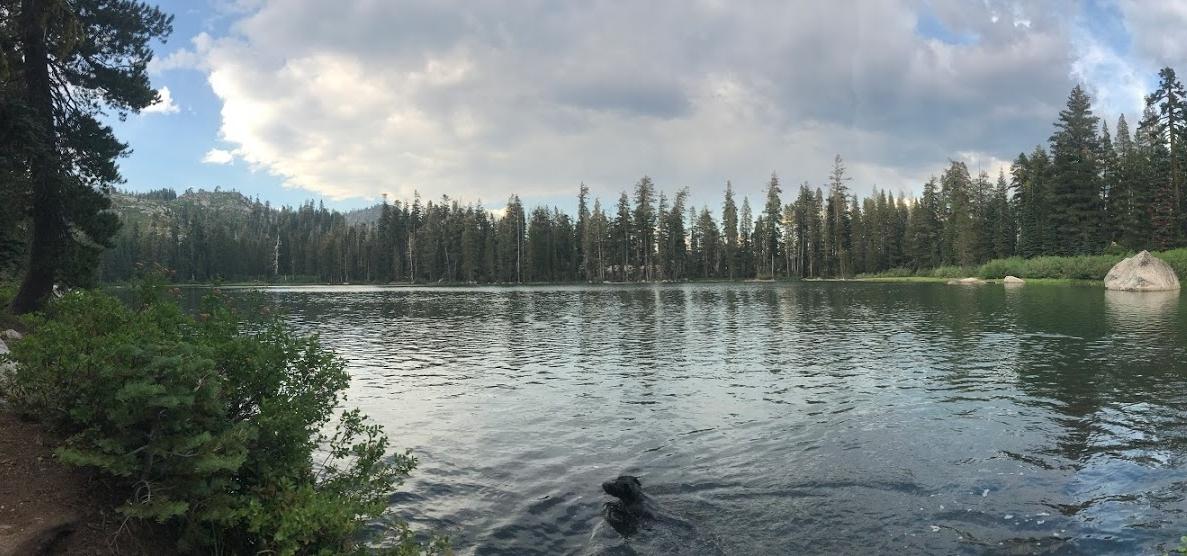 The pup enjoying a swim in Summit Lake.