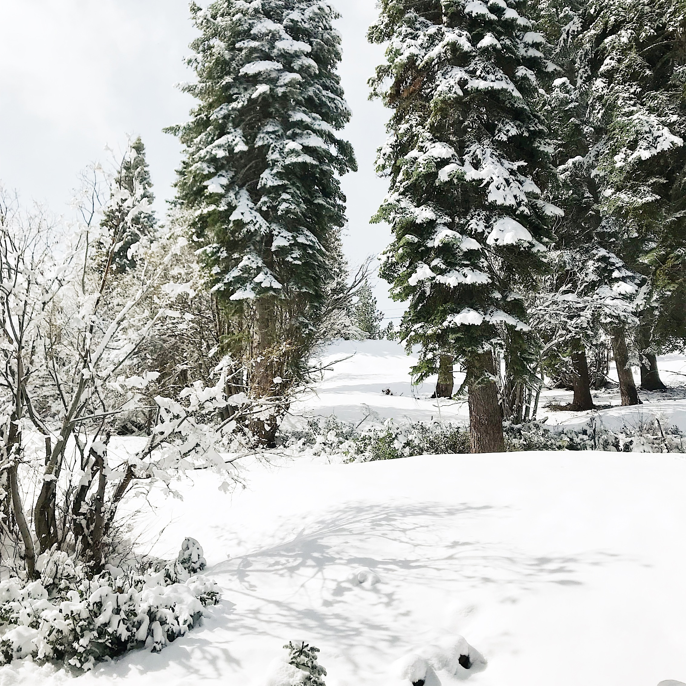 Photo taken May 19th in Tahoe Donner.