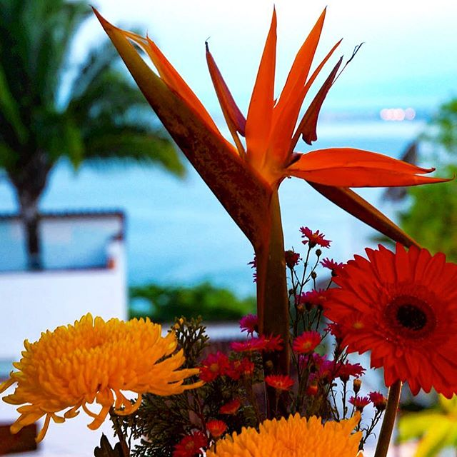 Come get your fresh flower and ocean view fix. Enjoy some time in paradise, you deserve it!