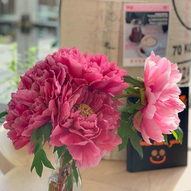 The things that bring us joy include great coffee, yummy food, good company, and GIANT flowers! Have you seen these incredible tree peony blossoms from my father's garden? They are a beautiful sight to behold 😍 #everbeancafe #community #coffeeandflowers